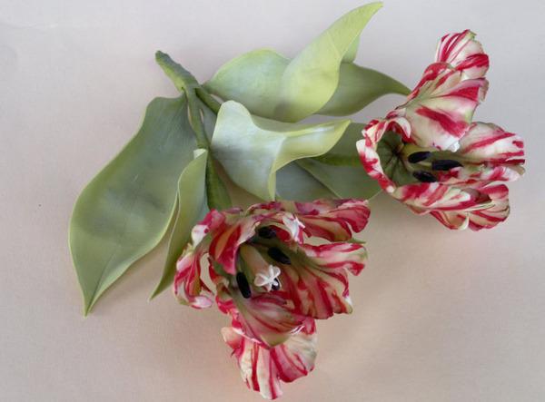robert tulip